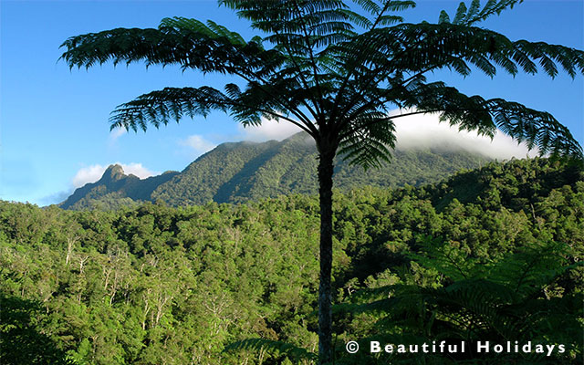 rain forest view on a south pacific holiday