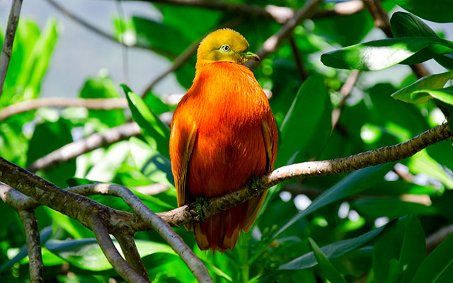 the orange dove - inspiration for our brand colours